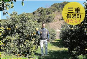 三重県一のみかん産地で農家を募集/かきうち農園/三重県御浜町